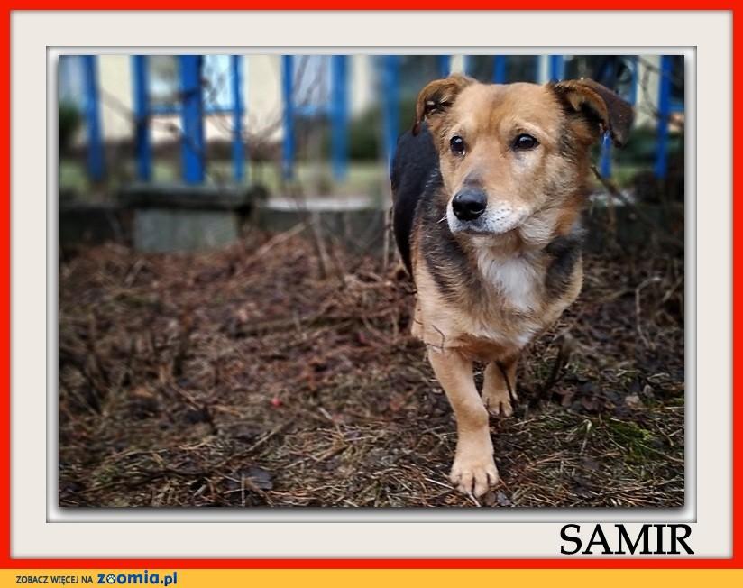 4 letni,średni 13 kg,łagodny,przyjacielski,szczepiony piesek SAMIR_Adopcja_