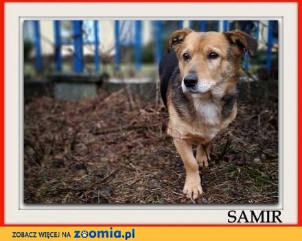 4 letni średni 13 kg łagodny przyjacielski szczepiony piesek SAMIR_Adopcja_