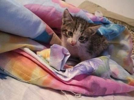 4 tygodniowy KOTECZEK szuka pilnie domu!   Koty pospolite cała Polska