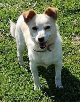 RAMBO - wrażliwy  malutki  6 kg psiak szuka domu   mazowieckie Warszawa