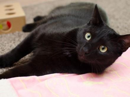 KOT: Wspaniały Ziutek z Fundacji Miasto Kotów szuka swojego miejsca