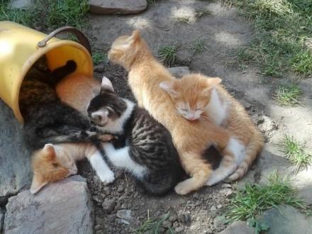 koty adopcja