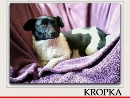Łagodna przesympatyczna malutka 6 kg sterylizowana suczka KROPKAAdopcja   małopolskie Kraków
