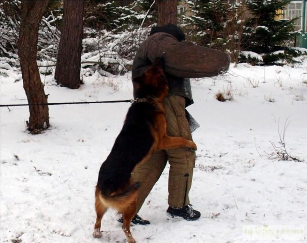 Psy wyszkolone