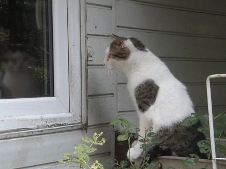 Kocur Maciej czeka na dom