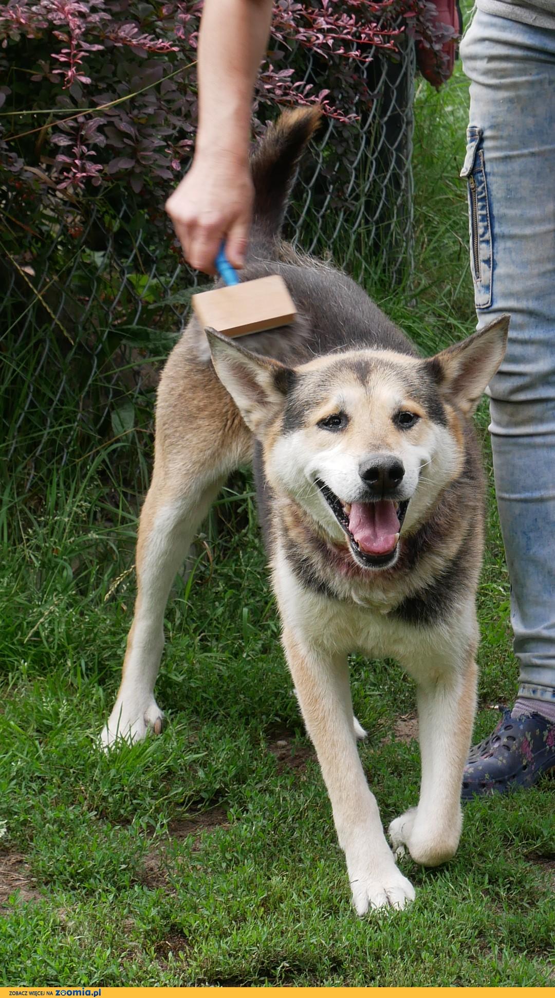 Podaruj psu , który tyle  wycierpiał to, co najcenniejsze -  dom i miłość!