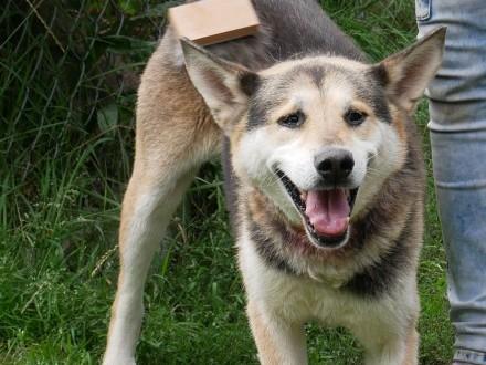 Podaruj psu   który tyle  wycierpiał to  co najcenniejsze -  dom i miłość!