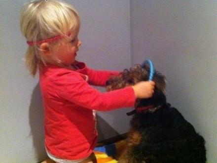 Oddam w dobre ręce psa Terriera  4 lata   mazowieckie Warszawa