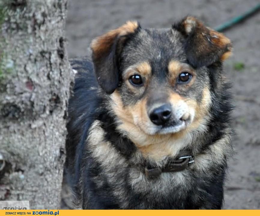 Czosnek - niepowtarzalny psiak