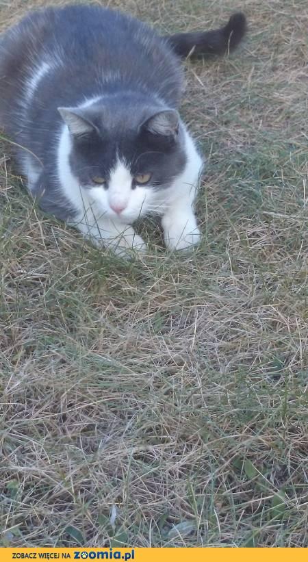 Zaginęła kotka -Popiełuszki, Kusocińskiego
