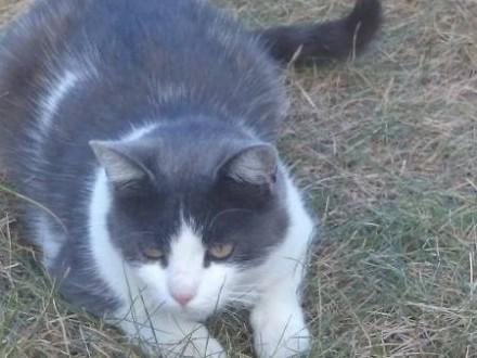 Zaginęła kotka -Popiełuszki  Kusocińskiego