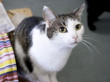 kotka Jadzia szuka domu