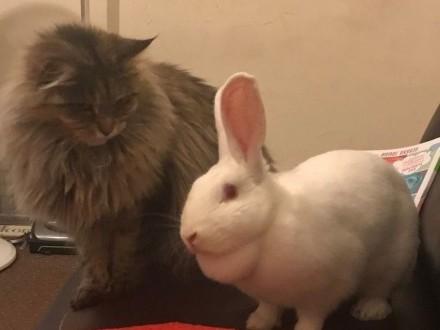 Dostepny bialy króliki zenski
