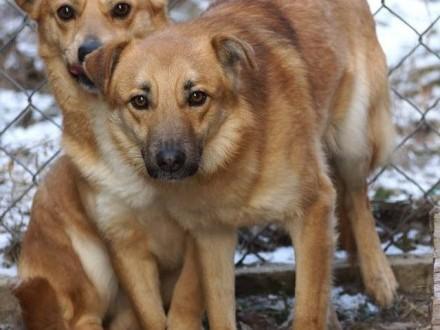 Młody  nieduży Baku  nieśmiały psiak szuka domu!