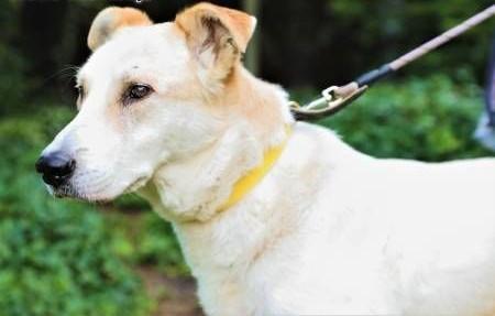 MUNDI - kochany  spokojny psiak szuka domu   małopolskie Kraków