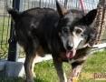 PIERNICZEK-bardzo uroczy, uśmiechnięty starszy psiak-szukamy DOMU