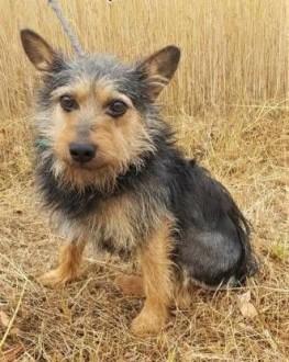 SZOREK - mały  6 kg  cudowny psiak do adopcji   mazowieckie Warszawa