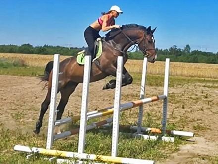 Kupię konia!
