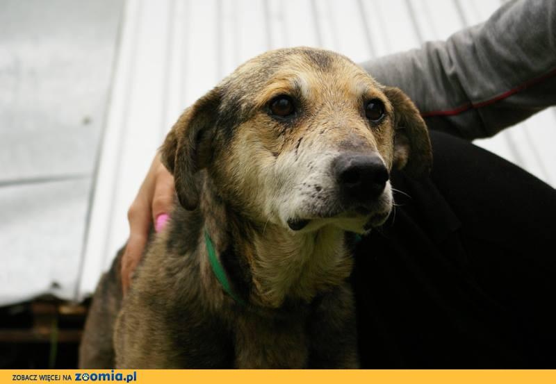 Misiek - psi wrak_ ludzkie dzieło_ Pomóż!