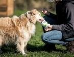 BUDYŃ - kto pokocha psa, co wielkie serce ma?...,  dolnośląskie Wrocław