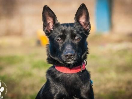 OTOZ Animals - Bakcylek - czarny łobuz pies mały ciałem wielki duchem!