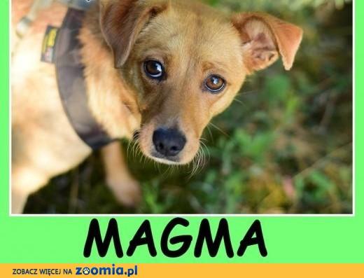 Niewielka 12 kg, delikatna,łagodna,towarzyska sunia MAGMA.Adopcja,  mazowieckie Warszawa