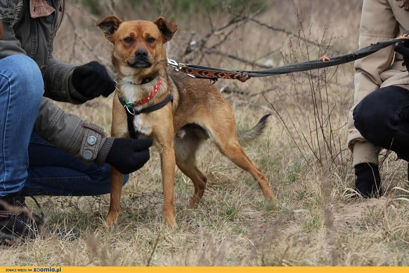 Rico- młodziutki,przyjacielski,nieduży psiak szuka domu
