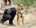'Rico- młodziutki,przyjacielski,nieduży psiak szuka domu