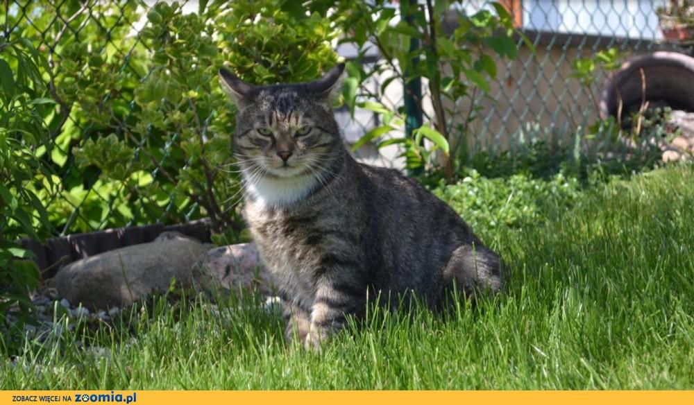 Kot kajtek Trójłapek_