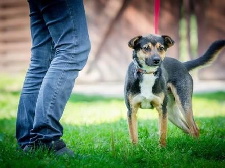 Niewielki  roczny Lolek - delikatny psiak szuka domu!