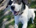 Przyjazna Saba, cudowna piłkoholiczka do adopcji! :)