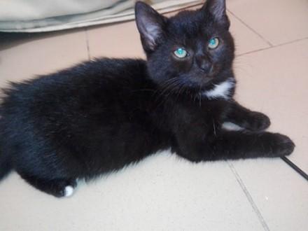 5 miesięczna koteczka Julka szuka kochającego domu!