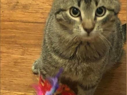 Porzucony  lubiący towarzystwo innych kotów  młody kocurek  szuka domu