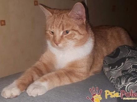 FABIO-piękny  dorodny  milutki kotek szuka domu  adopcja