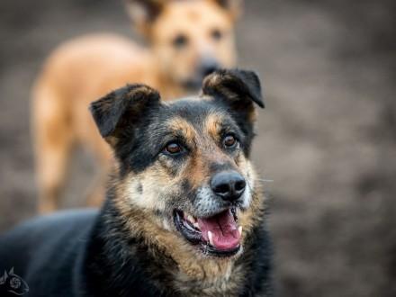 Leo - pies którego urok osobisty złapie cię za serce