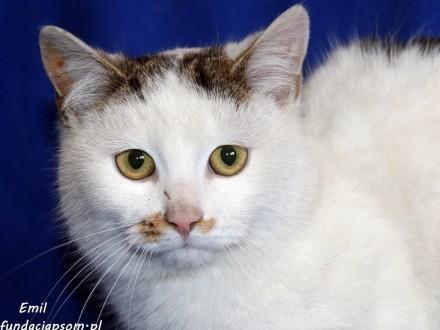 Emil - porzucony  niekochany kotek