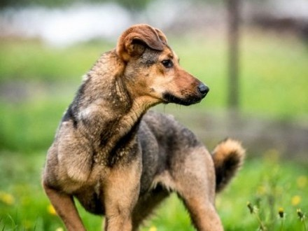 LIMONKA - psie orzeźwienie  a miłość ma w cenie!   świętokrzyskie Kielce