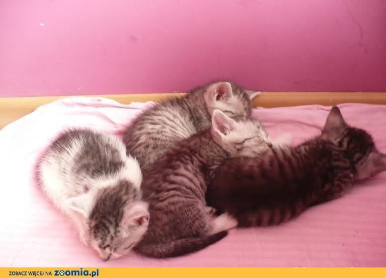 Szukamy domu dla małych kociaczków.