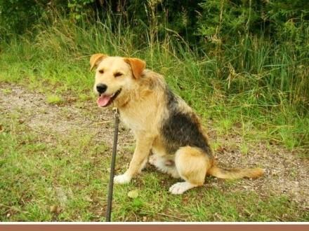3 lata terier mix szorstkowłosy pies MASH przyjazny kontaktowy_Adopcja_