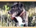 10 kg, sympatyczny,towarzyski,kontaktowy rodzinny psiak BLAKI_Adopcja