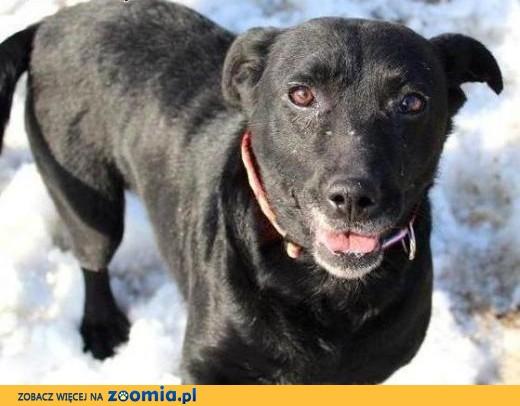 Czarne, uratowane psy przynosza szczęście! pokochaj FRUZIE,  mazowieckie Warszawa