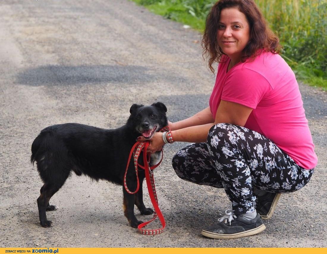 Arni-niewielki, czarny pies kochający ludzi i zabawę!,  śląskie Częstochowa