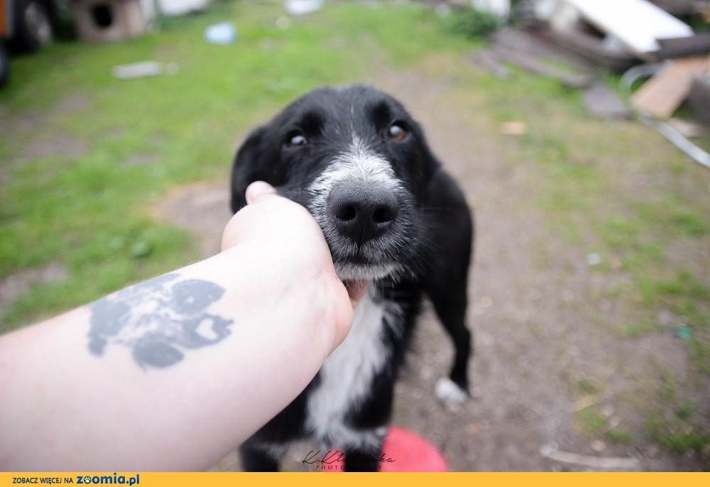 Lord, niekonfliktowa przylepa, cudowny psi dzieciak!