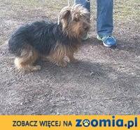 Uwaga! Zaginął 2-latek Bonzo!,  mazowieckie Warszawa