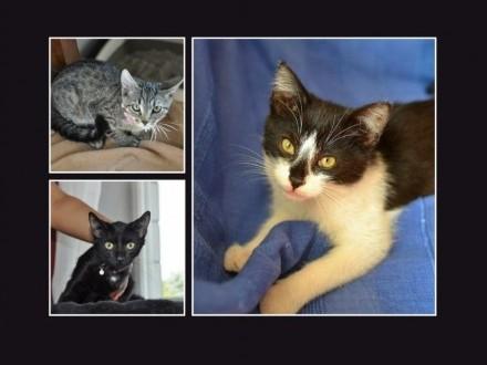 6 kociąt do adopcji  kociczki i koty  wspaniałe maluchy!