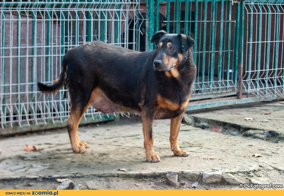 Lucky - pies o eleganckich manierach szuka domu