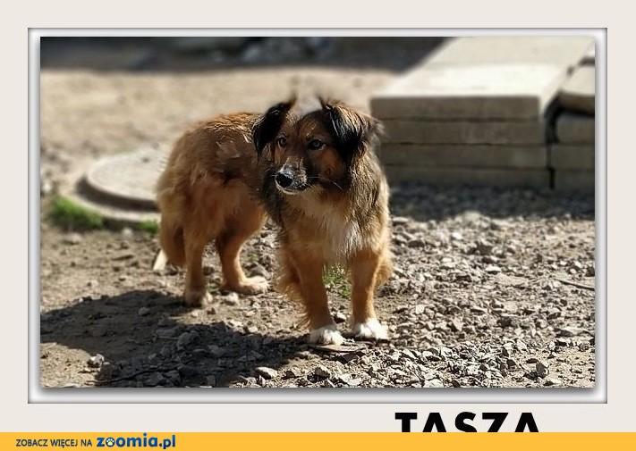 TASZA