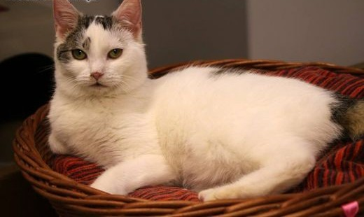 Młodziutka kotka Amica   dolnośląskie Wrocław