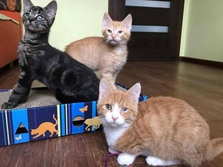 3 miesięczne kotki  Pączek i Kluska szukają domu!
