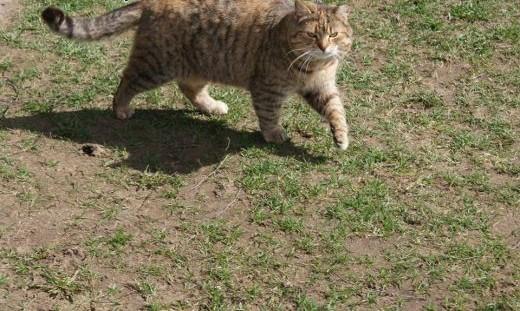 Młoda Margola  kocia pieszczocha szuka domu   Koty pospolite cała Polska